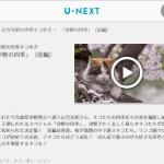プロフェッショナル 動物写真家・岩合光昭の世界ネコ歩き 動画と猫写真集&画像!5月29日