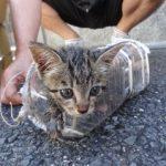 アンビリバボー 排水溝からペットボトルで助けられた子猫のココ!大阪の奇跡の9日間の救出劇!11月16日